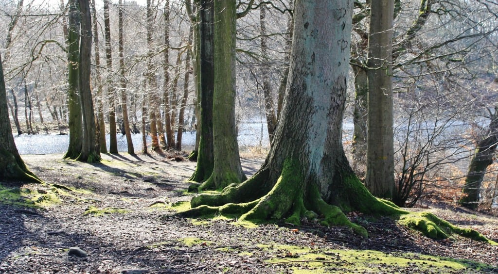 Lystskoven 1