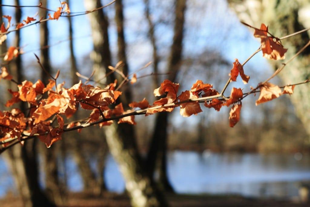Lystskoven 4