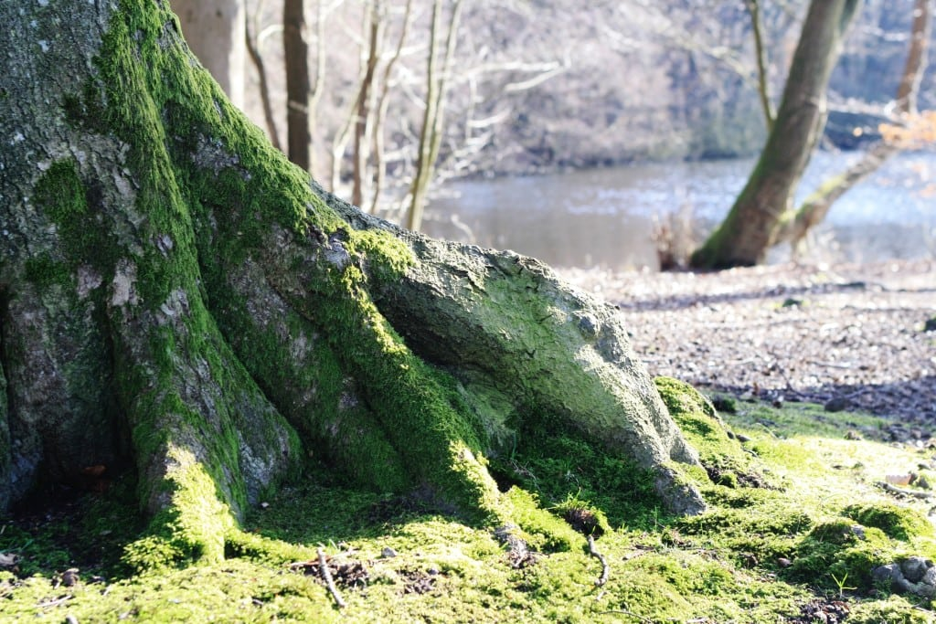 Lystskoven 6