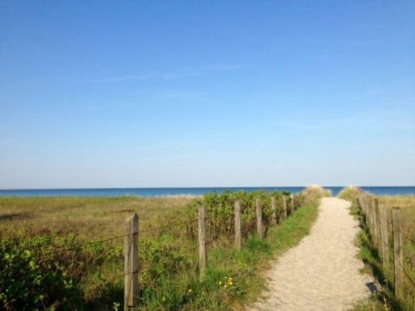 Stierne ved stranden