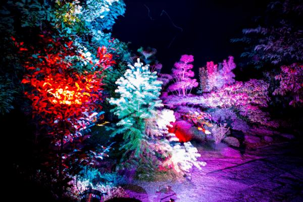 Ny eventyrlig og farverig jul i Birkegårdens Haver