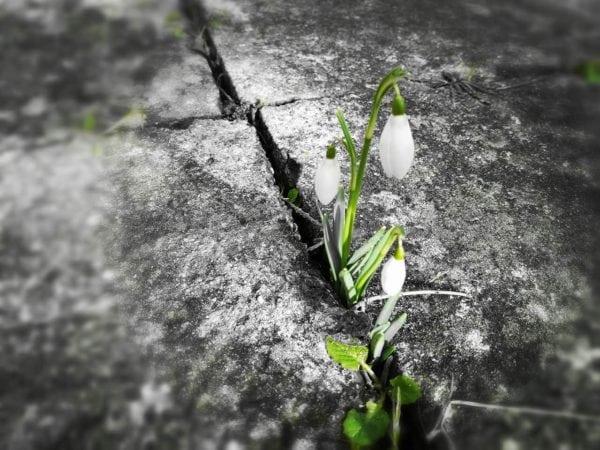Og det blev forår!