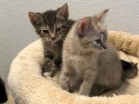 Familiedag med bamsehospital og søde katte