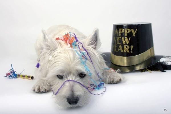 Nytårsfejring for byens kæledyr