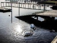 Den første forårsdag i Skælskør Havn. Taget d. 28. februar 2019. Foto: Mette Morgen.