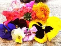 Spiselige blomster fra Madblomsten (pressefoto).