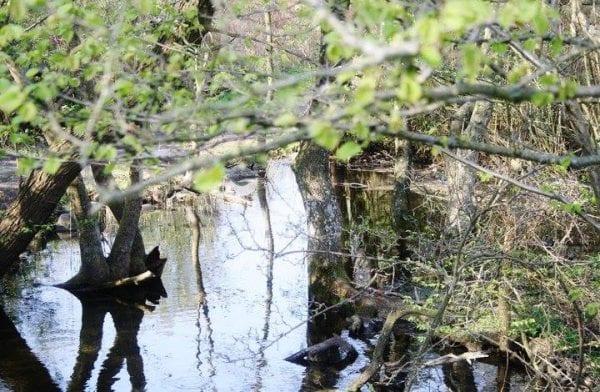 Slagelse Kommune anmoder politiet om at efterforske udslip
