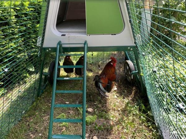 Mobile hønsehuse skaber energi til livet