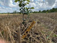 Danmark planter træer i Nordskoven